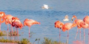 Lees Flamingos 1