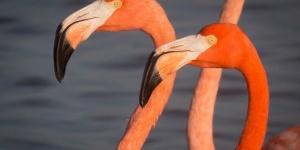 Lees Flamingos 2