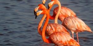 Lees Flamingos 3